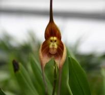 Orchideenarten, die Sie erstaunen, inspirieren, wortlos lassen…