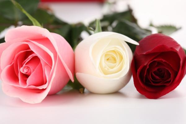 blumen symbolik rosen farben bedeutung