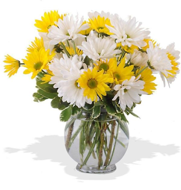schöner blumenstrauß gänseblümchen weiß gelb