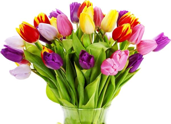 die tulpe bunter blumenstrauß tulpen