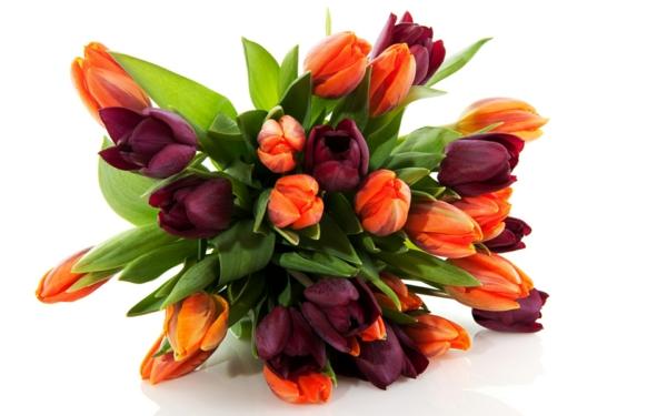 die tulpe tulpen blumenstrauß orange lila