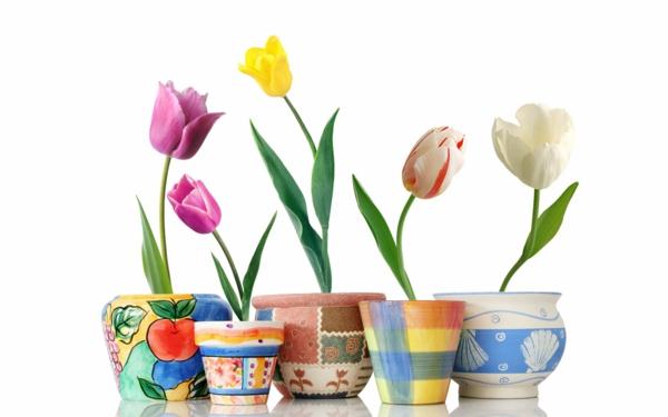 die tulpe unterschiedliche färbung schöne blumentöpfe