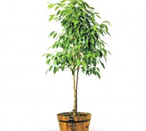 Pflegeleichte Zimmerpflanzen – Jeder Raum verdient schön auszusehen!