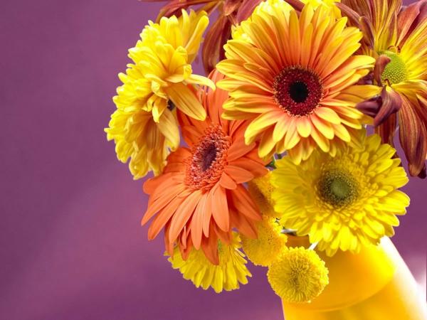 gänseblümchen blumenstrauß gelbe vase