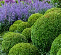 Garten anpflanzen – blühende Büsche und andere Gartenpflanzen