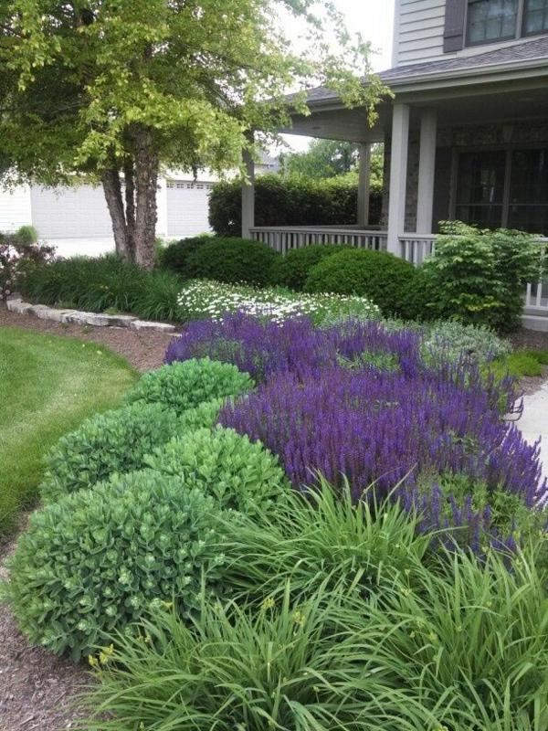 Gartenpflanzen  Garten anpflanzen - blühende Büsche und andere Gartenpflanzen