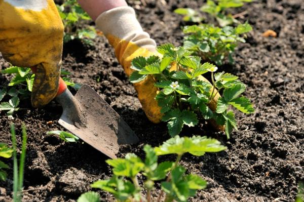 Garten Anpflanzen - Blühende Büsche Und Andere Gartenpflanzen Gartenarbeit Gartengestaltung Der Garten Im Fruhling
