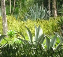 Bogenhanf und Pfingstrose als Gartenpflanzen – Pflege und interessante Fakten