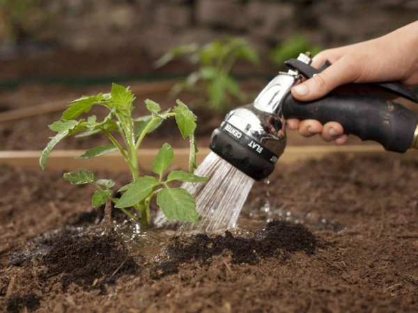gartenkalender märz einpflanzen gartenarbeit tomatenpflanze gießen