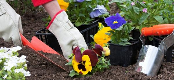 gartenkalender märz frühlingsblumen einpflanzen gartenarbeit