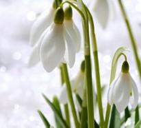 Gartenkalender im März: Welche Gartenarbeit steht im nächsten Monat an?