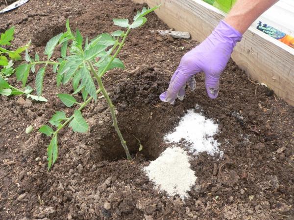 gartenkalender märz gemüse einpflanzen gartenarbeit düngen