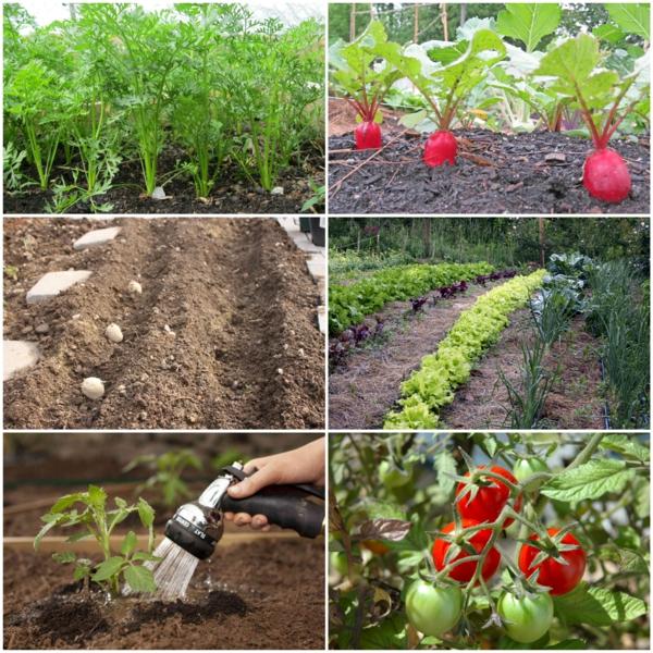 gartenkalender märz gemüse einpflanzen gartenarbeit frühling