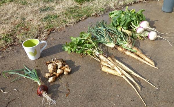 gartenkalender märz gemüse einpflanzen gartenarbeit