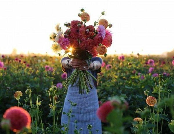 gartenpflanzen gartengestaltung ideen pfingstenrosen frühlingsblumen