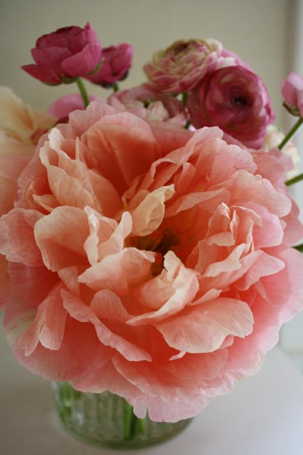 gartenpflanzen pfingstrosen blüte blühende pflanzen rose blumenstrauß