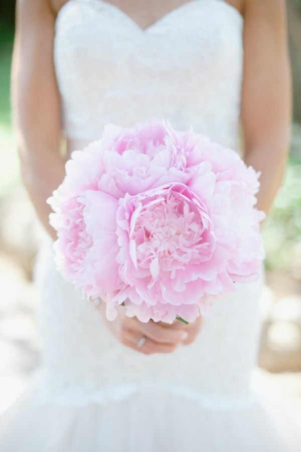 gartenpflanzen pfingstrosen brautstrauß blühende blumen rosen