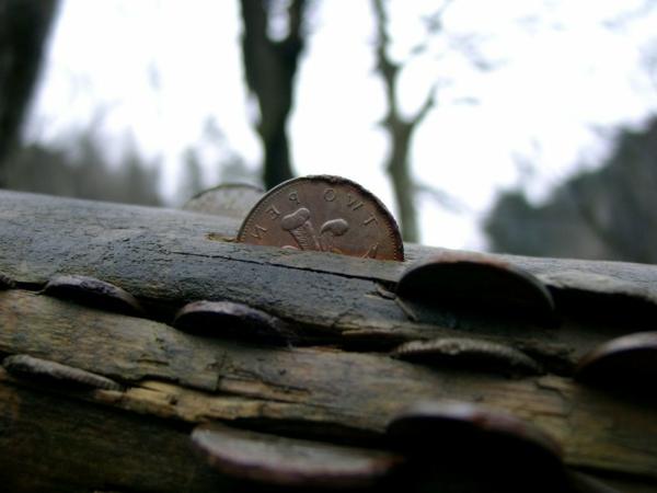 glückbringer bedeutung münzen baumstamm