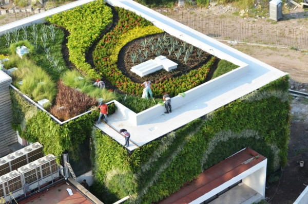 grünes dach dachgarten vegetation