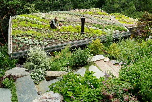grünes dach gemüse heilkräuter