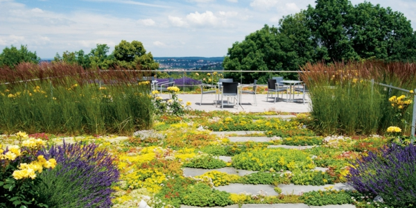 grünes dach lavendel gelbe rosen