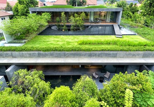 grünes dach pool wiese bäume