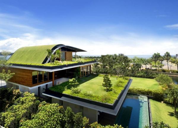 grünes dach subtropisch wiese palmen