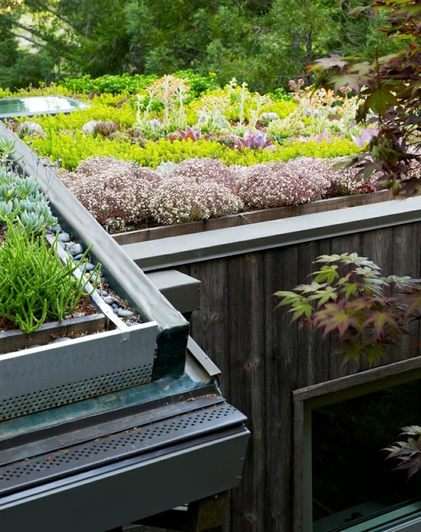 grünes dach sukkulenten kieselsteine