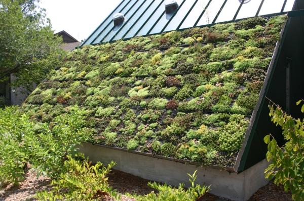 grünes dach sukkulenten vertikaler garten büsche
