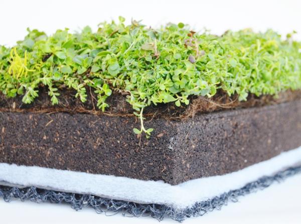 grünes dach technologie bodenschicht