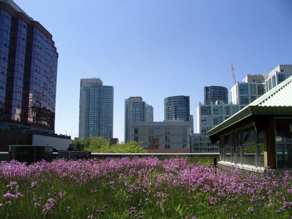 grünes dach wolkenkratzer lila blumen