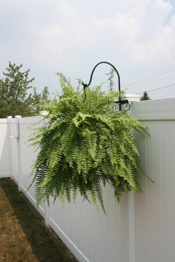 hängend zimmerpflanzen immergrün ideen