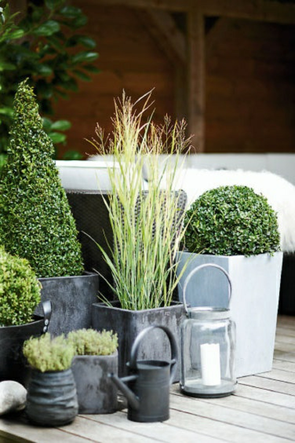immergr ne gartenpflanzen str ucher und hecke f r frische landschaft. Black Bedroom Furniture Sets. Home Design Ideas
