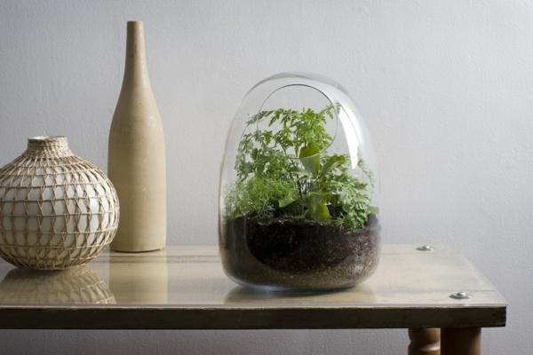 kaffeekanne glas mundgeblasen terrarium