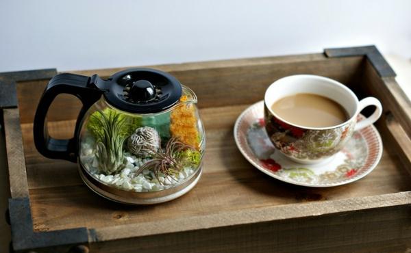 kaffee kanne milchkaffee beistelltisch terrarium