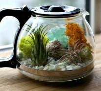 Kaffeekanne-Terrarium mit herrlichen Luftpflanzen selber gestalten