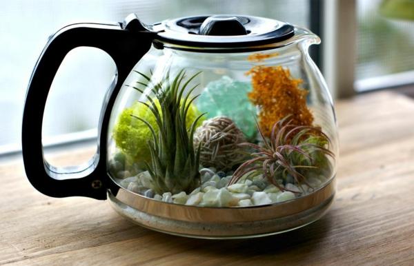 Kaffeekanne Terrarium Mit Herrlichen Luftpflanzen Selber Gestalten