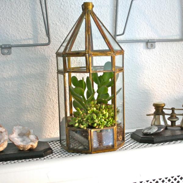 kaffeekanne terrarium alte metallene laterne sukkulenten