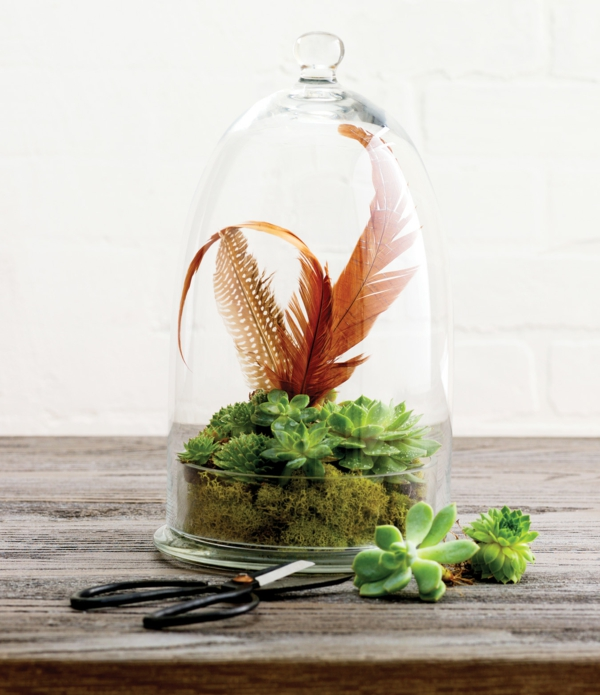 kaffeekanne terrarium mit herrlichen luftpflanzen selber. Black Bedroom Furniture Sets. Home Design Ideas