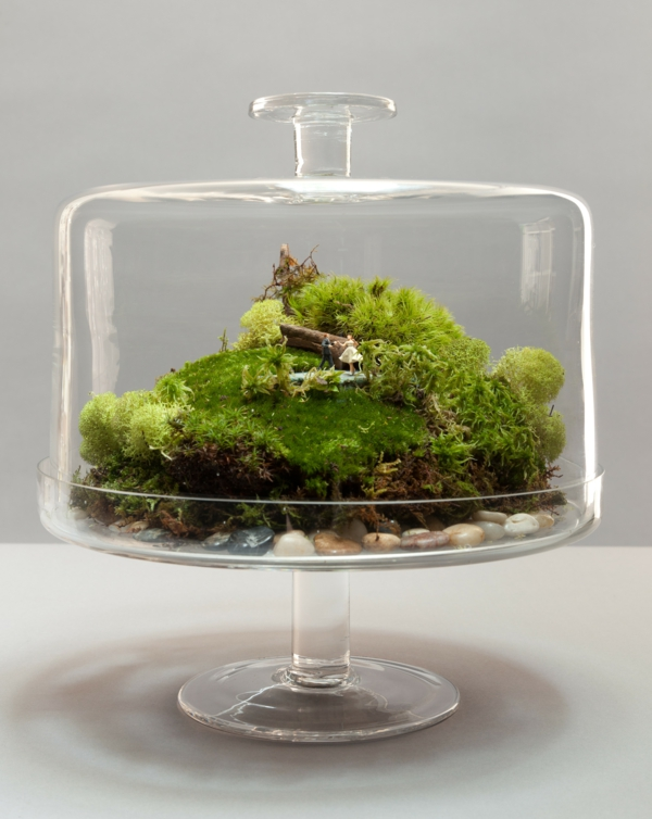 kaffee kanne terrarium glas tortenständer moos
