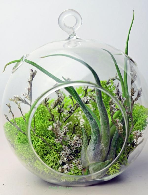 kaffeekanne terrarium rund glas moos