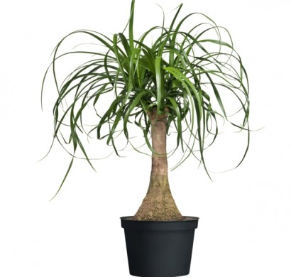 moderne zimmerpflanzen als frische deko fürs zuhause, Modern Dekoo