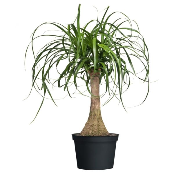 Moderne zimmerpflanzen als frische deko f rs zuhause for Zimmerpflanzen deko