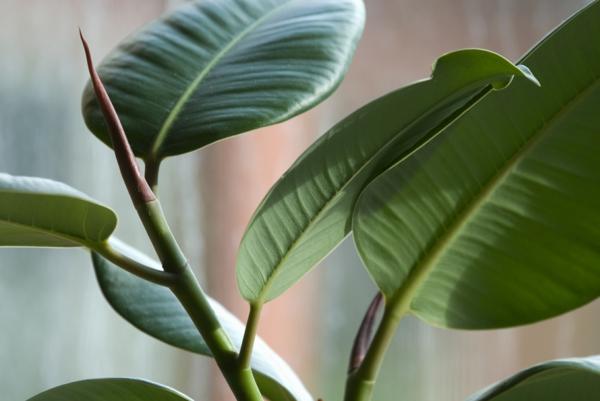 schöne dekoideen zimmerpflanzen grüne dicke blätter