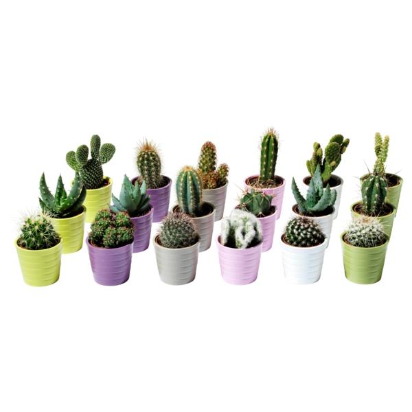 Moderne zimmerpflanzen als frische deko f rs zuhause for Kleine zimmerpflanzen