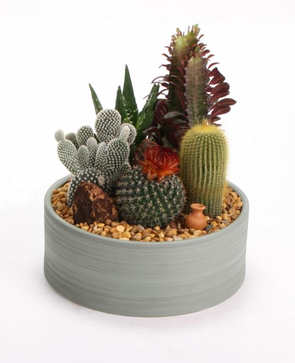 moderne zimmerpflanzen originell schöne dekoideen