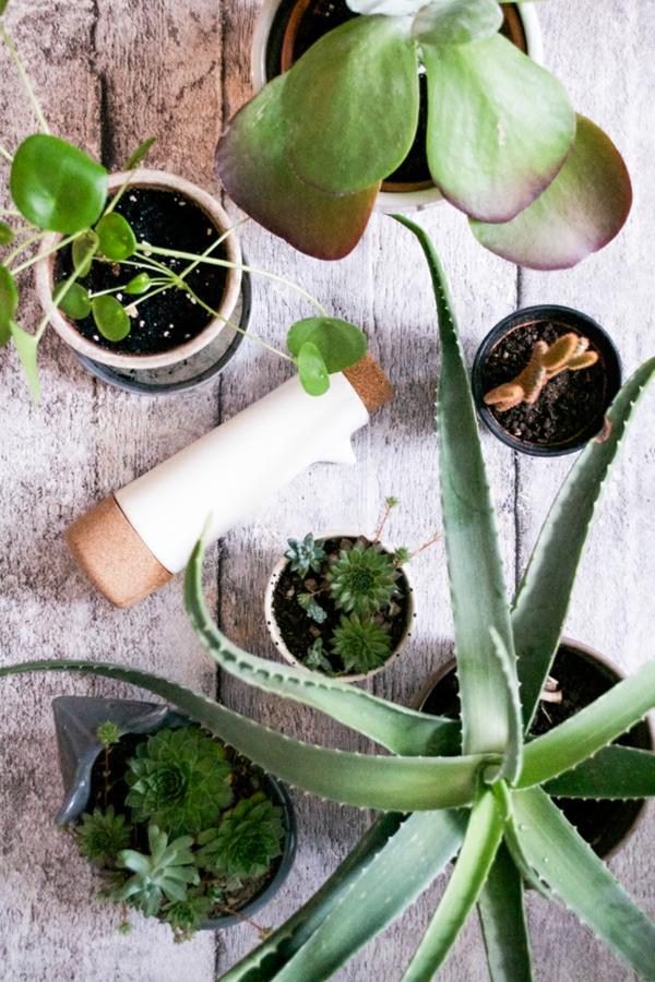 moderne zimmerpflanzen schöne dekoideen wohnideen