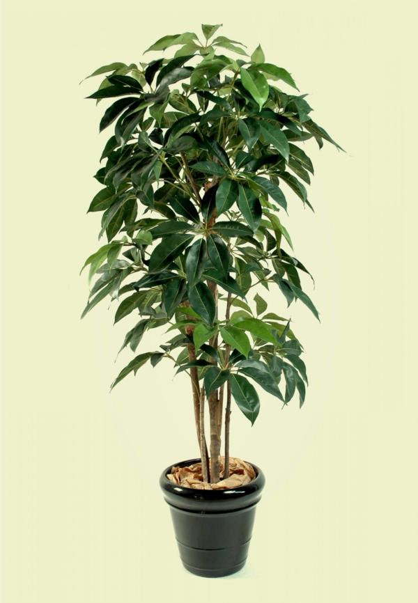 große grünpflanzen fürs wohnzimmer ~ surfinser.com - Grose Wohnzimmer Pflanzen