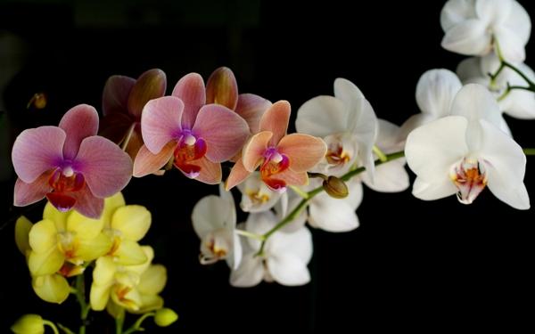 orchideen blüten farbig frisch schön