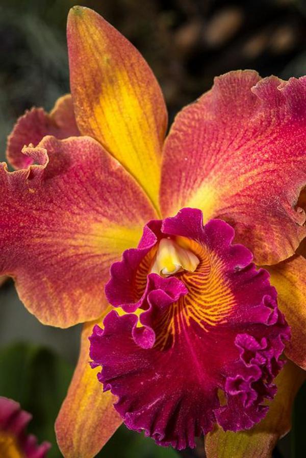 orchideen garten pflanzen schöne blumen